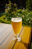 One cold light unfiltered beer in glass served on sunny outdoor Royalty Free Stock Photos