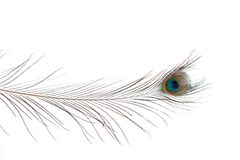 One Peacock Feather Royalty Free Stock Images