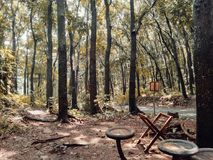 Place to relax in the forest. This is one of the comfortable place to relax in the forest, precisely in Brebes Central Java Indonesia Royalty Free Stock Photography