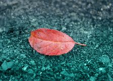 One coral leaf lying on the ground. royalty free stock photo