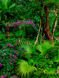 In one corner of the garden Royalty Free Stock Images