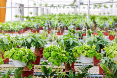 One corner of the greenhouse Stock Images