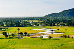 One corner of rice paddy field in An Giang Royalty Free Stock Images