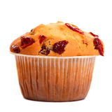 One Cranberry Muffin Stock Photography