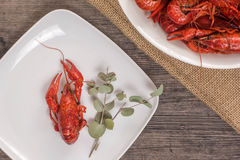 One crawfish on the wooden surface with glass of beer Royalty Free Stock Image