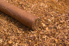 One cuban cigar Royalty Free Stock Photos