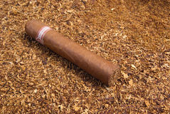 One cuban cigar ,disposit of the tobacco Stock Images