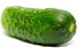 One cucumber Royalty Free Stock Photography