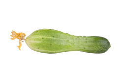 One cucumber with flowers isolated on white background Stock Images