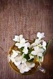 One cup of jasmine tea Stock Photos