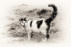 One cute cat standing on grass with its raised tail Royalty Free Stock Photos