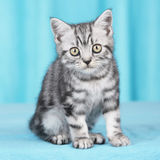 One cute kitten Royalty Free Stock Images