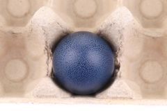 One dark blue easter egg at cardboard Stock Image