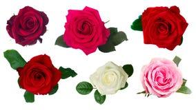 One dark  red rose Stock Image