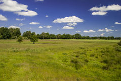 One Day in the Country. Rural spot - trees, field, grass - deep blue sky with few white clouds Royalty Free Stock Photo