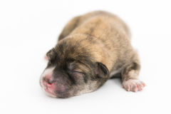 One day for newborn pup Stock Photography