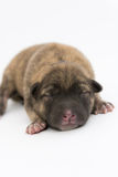 One day for newborn pup Stock Photos