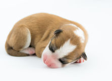 One day for newborn pup Stock Photo