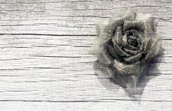 Bronze rose Royalty Free Stock Photo