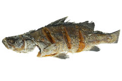 One deep fried fish isolated on white background Royalty Free Stock Photography