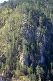 Dense forest on the mountain. One dense forest on the mountain Stock Photography