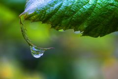 One Dew Drop on a Leaf in High Dynamic Range Royalty Free Stock Image