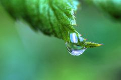 One Dew Drop on a Leaf in High Dynamic Range. One dew drop holds on to a leaf in High Dynamic Range royalty free stock images