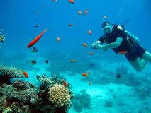 One diver in the Red Sea. Many beautiful fishes stock photos