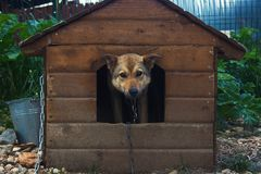 One dog in the doghouse. In a shelter Royalty Free Stock Image