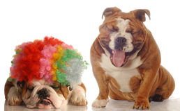 One dog laughing at another royalty free stock image