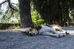 One dog lies on the road Stock Photo