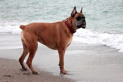 One dog by the sea royalty free stock photos