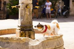 One dog takes any opportunity for a drink of the street fountain on the street in Bari stock image