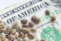 One dollar banknote and hemp seeds Stock Images