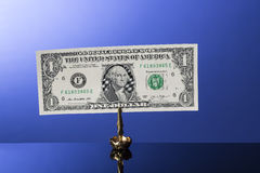 One dollar bill in holder on blue with reflection Royalty Free Stock Photography