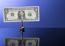 One dollar bill in holder on blue with reflection Royalty Free Stock Images