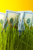 One dollar bills among green grass Stock Photography