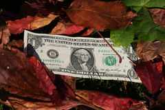 One dollar bills on a leaf background Royalty Free Stock Photography