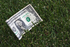 One dollar on green grass Royalty Free Stock Image