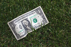 One dollar on green grass Stock Photo