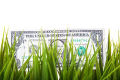 One dollar note in grass Stock Images