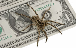 One dollar note and poison spider Royalty Free Stock Images