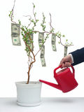 One dollar tree. Businessman with red water can watering a pot tree with one dollar bills Stock Photo