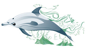 One dolphin in the sea. Design of dolphin swimming in the ocean Stock Photo