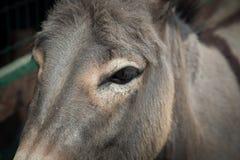 One donkey Royalty Free Stock Photography