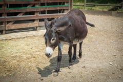 One donkey Stock Photo