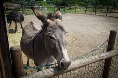 One donkey Royalty Free Stock Photos
