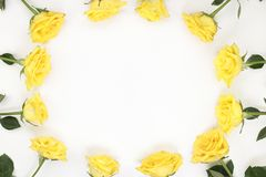 One Dozen Yellow Roses as an Oval Border on White. Twelve yellow roses arranged as oval frame border. Yellow roses surround the edges of white paper. Bright royalty free stock photos