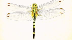 Flying dragon. One dragon fly Stock Photo