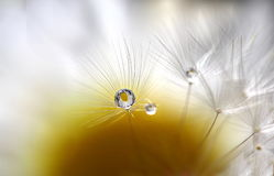 One drop on the flower Stock Photos
